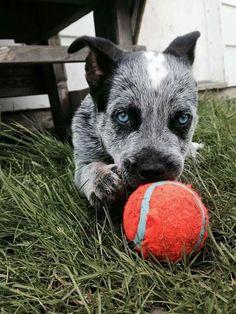 Baby's got blue eyes ♡♡♡