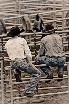 cowboys on the fence! Allissa- I instantly thought of your Wrangler butts drive me nuts saying!!