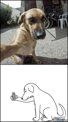 Dog taking a photo... I dont know why this is so funny