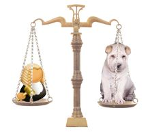 If you need dog related legal advice or help, who can you turn to? We look at how and where to get specialist dog law advice http://www.dfordog.co.uk/blog/getting-dog-legal-advice.html