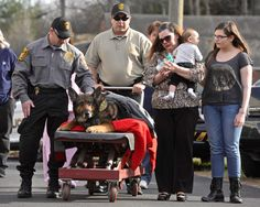 Officer Zeus honored with last ride through Ridgefield - NewsTimes Military Working Dogs, Military Dogs, Police Dogs, War Dogs, German Shepherd Dogs, German Shepherds, Service Dogs, Mans Best Friend, Dogs And Puppies