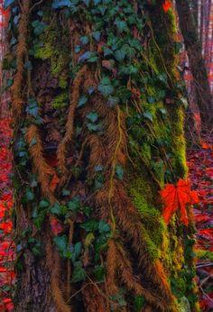 Rainforest Trees | Forest Plants