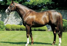 Giant's Causeway, son of Storm Cat and Mariah's Storm
