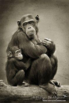Monkeyyyys