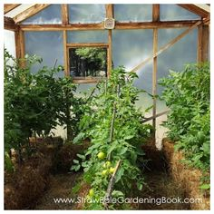 Setup A Straw Bale Garden Inside A Greenhouse For A Longer Growing Season... | http://www.strawbalegardeningbook.com/inspiration/commercial-sized-straw-bale-garden/