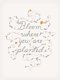 Daily Inspiration #quote #quotes #bloom