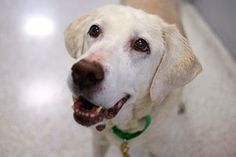 Find helpful information on senior dog health at http://www.aspca.org/pet-care/dog-care/aging