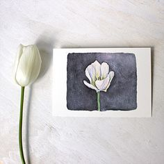 White Tulip Watercolor Print