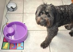 PetSafe Current Pet Fountain #sponsored review on Two Classy Chics blog