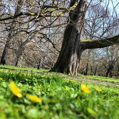 Am Fuße des Baumes #frühling #leipzig #park #palmengarten