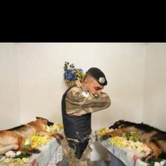 These German Shepherds gave their lives for our great country!  They are being honored before burial.  Our w War Hero's protecting our soldiers so they can come home alive and not blown up.