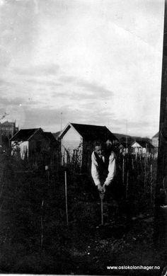Velkommen til Oslo kolonihagers nettsider.  Hvem er kolonihagene for? Alle som har fast bosted i Oslo, og kan dokumentere dette med bostedsbevis fra Oslo folkeregister, kan sette seg på venteliste.  Parsellene leier vi av Oslo kommune, og de ble etablert for de av byens borgere som ikke hadde tilgang til egen hage. Siden det er kommunen som eier jorda, stilles det egne krav til vedlikehold av fellesområder, parseller og hytter som man ikke finner i andre hyttegrender.