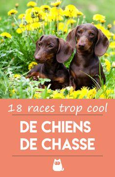 Schleich Farm Life Golden retriever chienne chien chien animal de compagnie jeu personnage