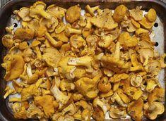 15 g frais CHANTERELLE jaune mycélium Cantharellus cibarius   Etsy Mushroom Seeds, Mushroom Spores, Mushroom Cultivation, Culture Champignon, Growing Mushrooms At Home, Spawn, Plantation, Harvest, Stuffed Mushrooms