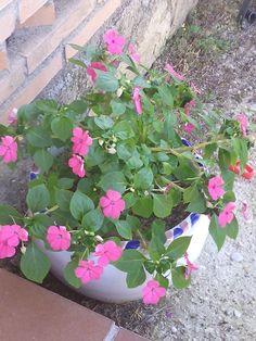 Alegria Plants, Joy, Plant, Planets