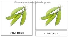 Vegetables - Montessori 3-Part Classified Cards - Printable Montessori Learning Materials for home and school.