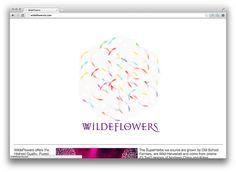 WildeFlowers.com Website   by WILLPOWER STUDIOS | WILLIAM ISMAEL | www.WillpowerStudios.com