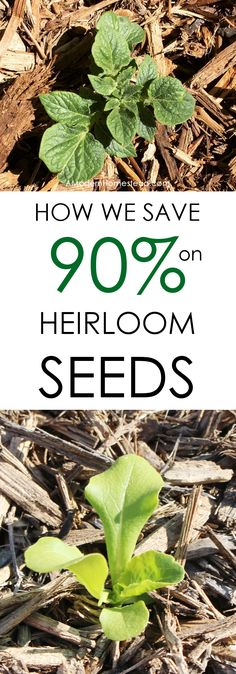 Heirloom seeds are all the rage with organic gardeners these days, but they can be very costly if you don't know where to get them. Find out how we save over 90% on our heirloom seeds!
