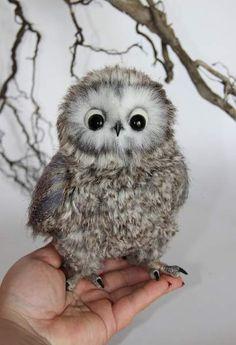 owl Mitya