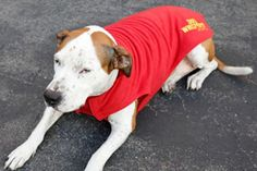 Dog Coats for Shelter Dogs | Cesar Millan