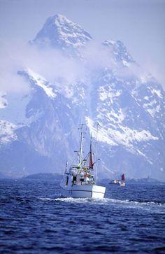 fiskebat | Lofoten   (fish boat)