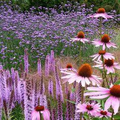 Echinacea, Liatris and Verbena bonariensis Prairie Planting, Prairie Garden, Garden Cottage, Beautiful Gardens, Beautiful Flowers, Beautiful Pictures, English Garden Design, Plant Design, Dream Garden