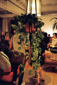 Launch Party, The plant Journal #gardening