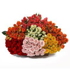 Spray Roses - Assorted (100 Stems) - Sam's Club
