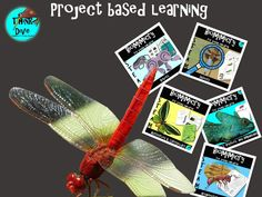This project-based learning resource focuses on animals and plants. These resources will guide you through the process of using biomimicry and steam activi. Steam Activities, Primary Classroom, Project Based Learning, Teaching Materials, Creative Thinking, Some Ideas, Graphic Organizers, Learning Resources, Tes
