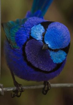 Nature Animals, Baby Animals, Cute Animals, Tropical Birds, Colorful Birds, Pretty Birds, Beautiful Birds, Animals Beautiful, Pet Bird Cage