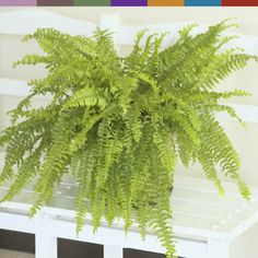 houseplants that clean the air in your home
