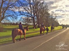 Our equestrian team bringing our mid-term break guests on an estate ride. It has been a beautiful day here in Mount Juliet. Mount Juliet, Mid Term, Beautiful Day, Equestrian, Bring It On, Horses, Animals, Animales, Animaux