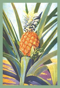 Pineapple 28x42 Giclee on Canvas