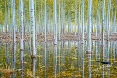 The Enchanted Forest of Mirrors by Gary Randall on 500px