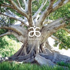 Join our family tree as we branch out globally! www.terrirobidas.arbonne.com