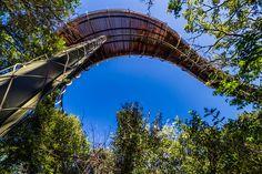 No Jardim Botânico Nacional de Kirstenbosch, na África do Sul, é possível caminhar a par da copa das árvores, a 12 metros de altura.