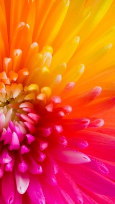 Colorful Tropical Flowers iPhone 6 Plus Wallpaper 21681 - Flowers iPhone 6 Plus Wallpapers