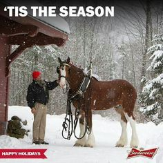 'Tis the Season. Clysdale Horses, Horses And Dogs, Draft Horses, White Horses, Show Horses, Breyer Horses, Work Horses, Pretty Horses, Horse Love