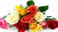 The Meaning of Every Rose Color - Valentine's Day Flowers - Good Housekeeping Chrysanthemum Meaning, Rose Meaning, Gerbera, Pink Carnations, Rose Color Meanings, Flower Meanings, Amaryllis, Every Rose, Floral Arrangements