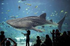 самый большой океанариум Джорджия