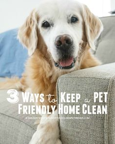 3 Ways to Keep a Pet