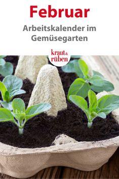 Hydrangea Care, Hydrangea Flower, How To Start Yoga, Amazing Flowers, Garden Paths, Garden Inspiration, Vegetable Garden, Beautiful Gardens, Flora