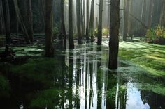 reflection forest water