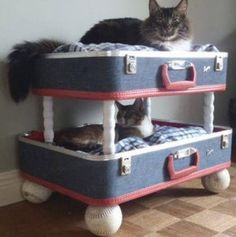 DIY Cat bunk beds - too cute! - Cat AccessoriesDIY Cat bunk beds - too cute! Cat Bunk Beds, Pet Beds, Doggie Beds, Old Suitcases, Animal Projects, Diy Projects, Cat Furniture, Diy Stuffed Animals, Crazy Cats