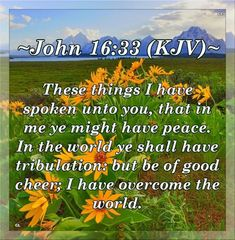 John KJV Hallelujah and more Blessings! Biblical Quotes, Bible Verses Quotes, Whatsoever Things Are Lovely, John 16 33, King James Bible Verses, Abba Father, Overcome The World, I Have Spoken, Christian Videos