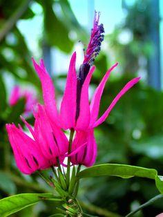 Beautiful Birds, Balcony, Seasons, Garden, Plants, Flowers, Garten, Seasons Of The Year, Lawn And Garden