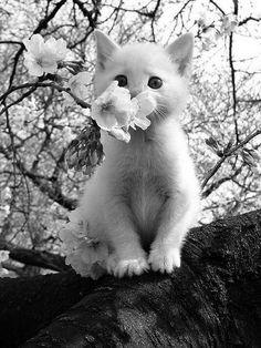 kitty + cherry blossom tree