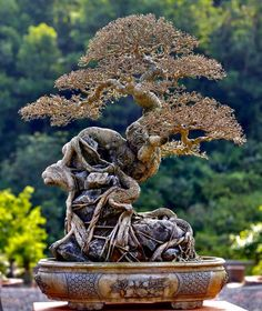 Bonsai Pruning, Photography Bags, Ganesha Art, Bonsai Art, Miniature Trees, Tree Art, Burlap Wreath, Lion Sculpture, Statue