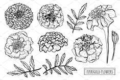 Marigold Flowers Set by Sunset&Sea Design on Birth Flower Tattoos, Flower Tattoo Drawings, Flower Tattoo Designs, Marigold Tattoo, Marigold Flower, Lotus Flower, Leg Tattoos, Black Tattoos, Sleeve Tattoos