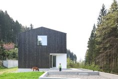 Casa Privada E Escritório Cercado Por Bosques